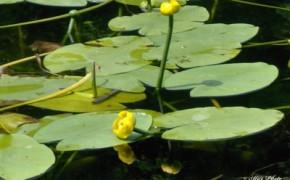 Padurea Baisa, Ipotesti – Lacul din poeziile lui Mihai Eminescu