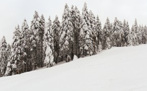 Partia de ski Lupului – Straja