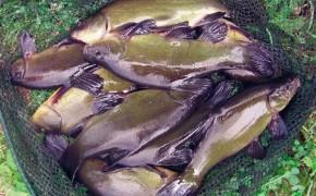 Balta de pescuit Bogonos – Iasi