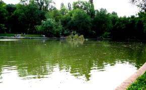 Lacul de pescuit 23 August – Bucuresti